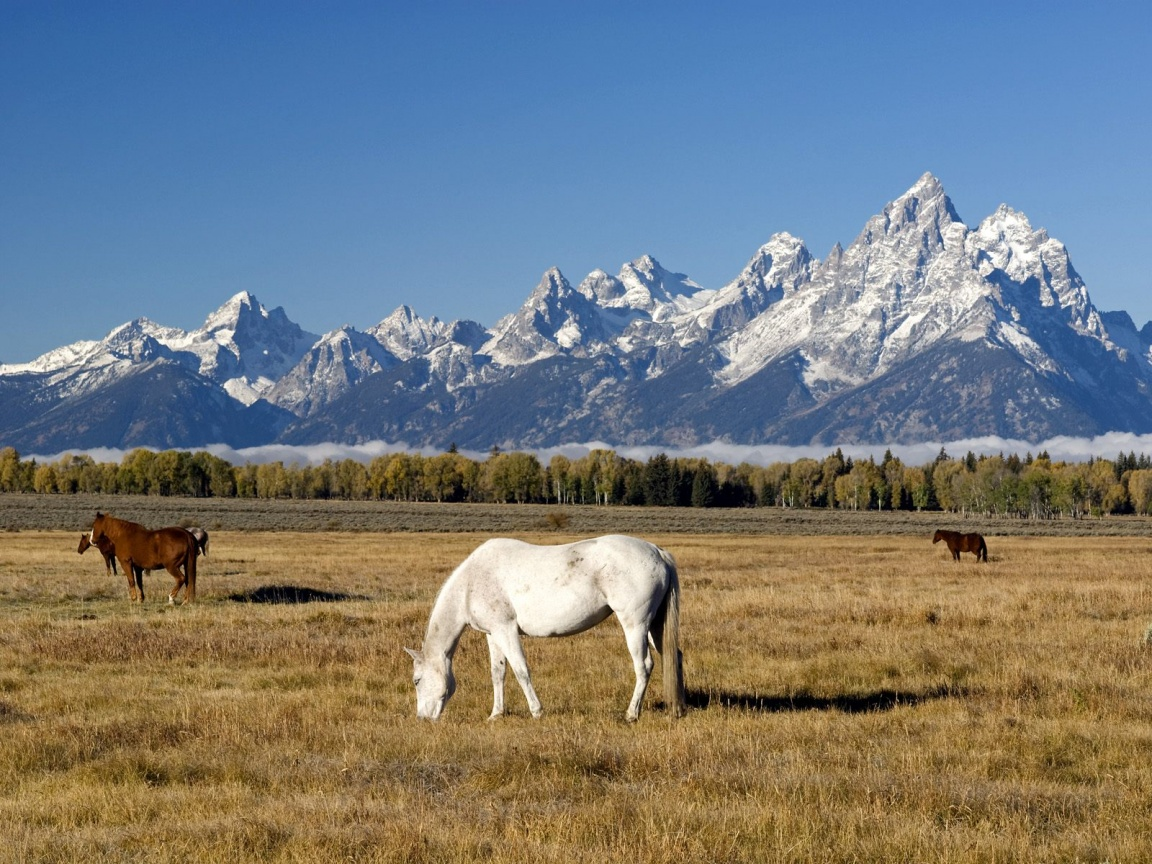 Rocky Mountains Wyoming Autos Post