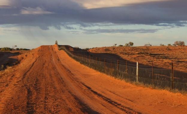 Wild Dog Fence